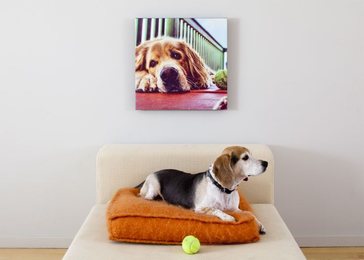 """A Pet Portrait Canvas Print 