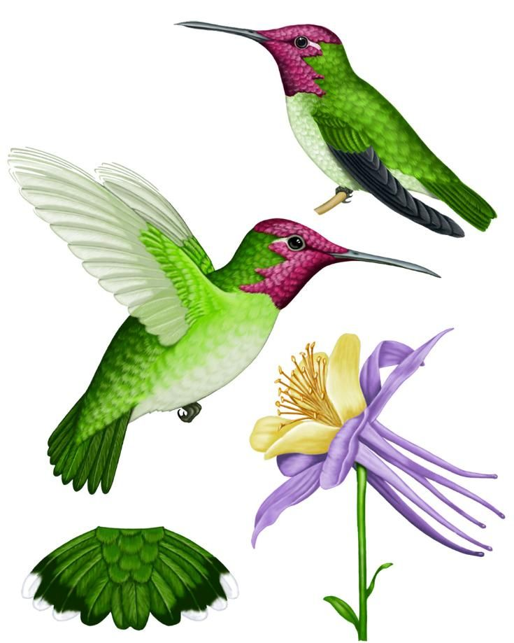 hummingbird images | Colorful Hummingbird Tattoos