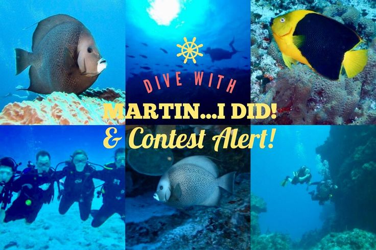 This week we featured Dive with Martin, located in Cozumel Mexico  on our blog.  If you head to the article and read the entire thing we share a link to win a trip to Mexico.  If you want to save on travel across North America and abroad, sign up with SQM