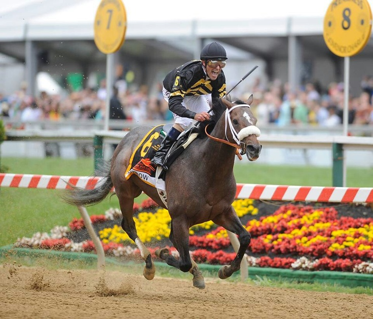 Preakness Winner 2013 Oxbow and his jockey Gary Stevens