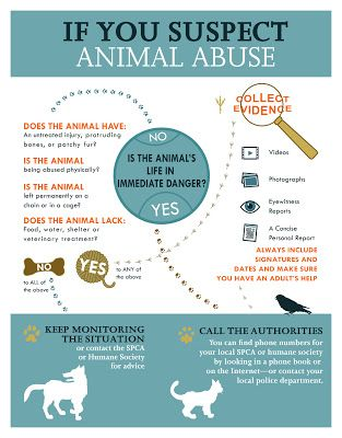 If You Suspect Animal Abuse infographic created for Nix Minus One, YA novel by Jill MacLean