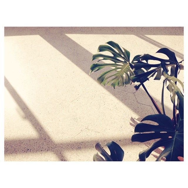 Hello gorgeous  #luz #rayos #sol #planta #piso #sombras #sunlight #plant #green #warm #shadows #daylight