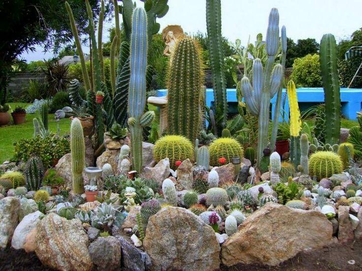 17 mejores im genes sobre arreglos cactus y suculentas en for Arreglo de jardines pequenos