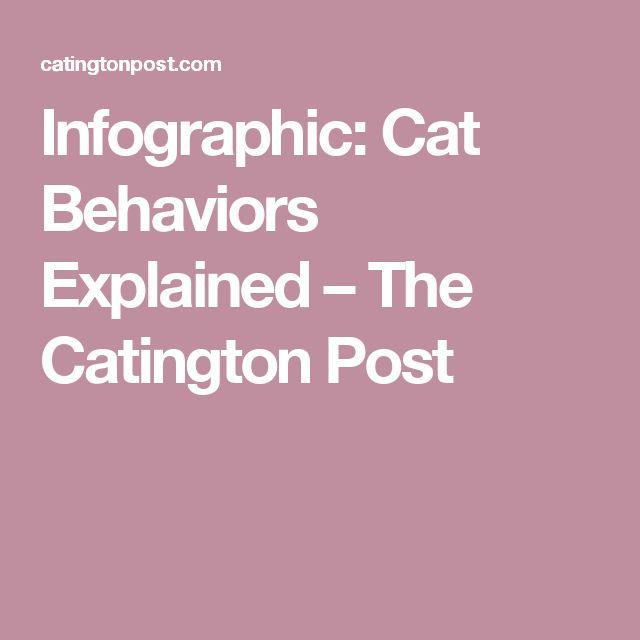Infographic: Cat Behaviors Explained – The Catington Post ...