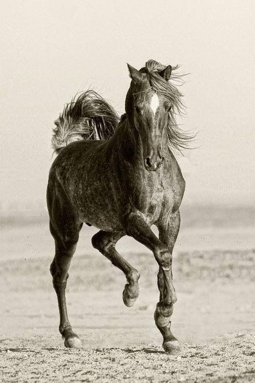 Some Fancy Stepping From an Old-Fashioned Type Horse.