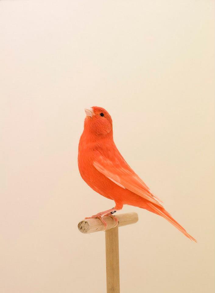 Orange bird... lovely little guy! :D