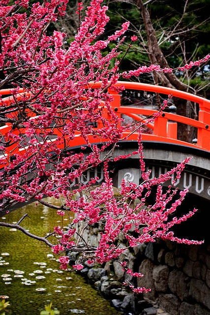 Bridge and Plum flower, Shimogamo Shrine, Kyoto, Japan