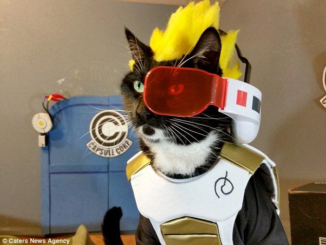 Cat cosplay:Fawkes as Vegeta from Dragonball Z, masterminded by plumberNathan Smith from Washington
