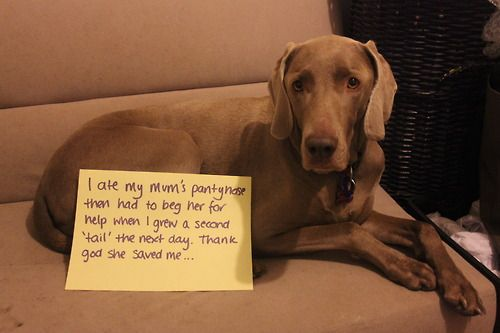 Dogshaming I laughed till I cried on this one! Funny blog!