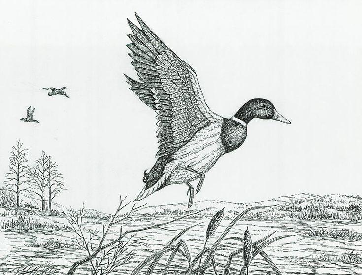 запечатлеть картинки диких птиц простым карандашом посылали