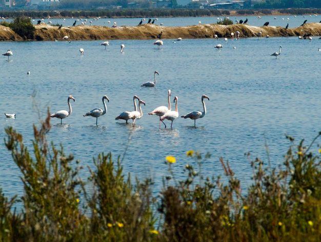 8 bonnes adresses chic pour visiter l'Algarve : Ria Formosa