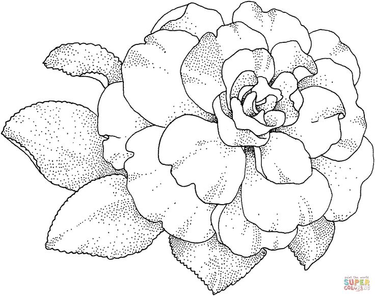 1038 best drawing flowers / tutorials / Рисуем цветы images on ... - Cherry Blossom Tree Coloring Pages