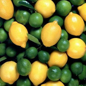 Growing Lime Trees - Care and Fertilizer Tips