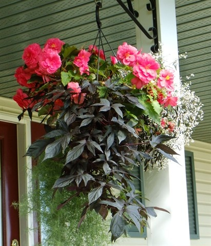 102 Best Hanging Shade Baskets Planters Images On Pinterest Potted Garden Beautiful Flowers And Container