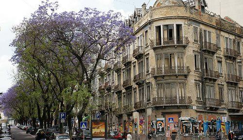 Rua Almirante Barroso - Jacarandás