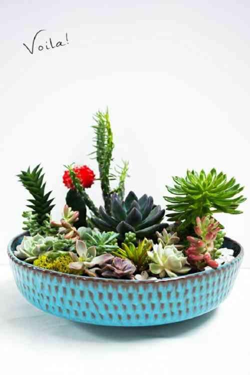 60 best cactus et succulents images on pinterest propagating succulents succulents and. Black Bedroom Furniture Sets. Home Design Ideas