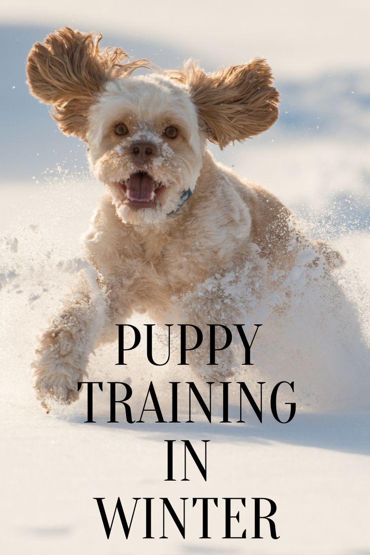 Puppy Training In Winter Puppies Training Your Puppy Puppy
