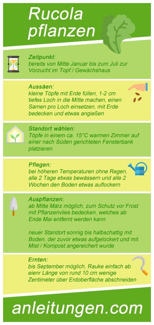 Rucola pflanzen - Wann und wo sollte man Rucola pflanzen? Wie pflegt man die Rauke richtig? Wann ist die Pflanze bereit für die Ernte? All das erfährst du in dieser Infografik.