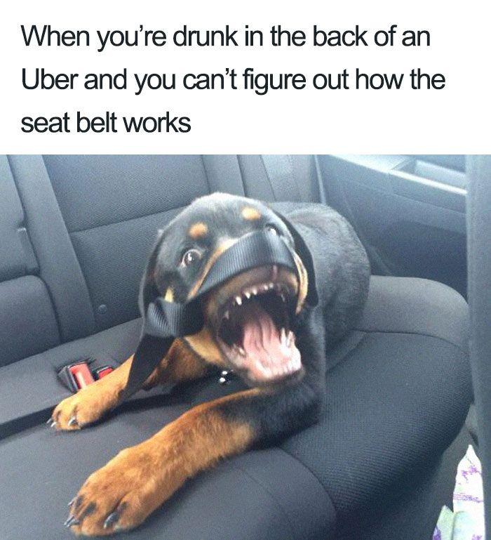 20 Hilarious Uber Animal Memes Funny Dog Memes Animal Memes