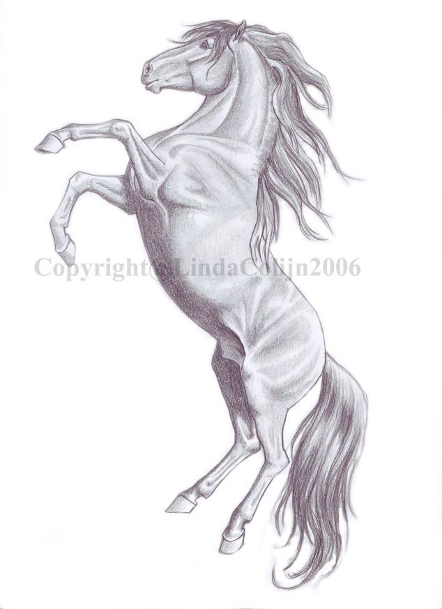 rearing horse drawing pencil drawings of horses rearing wip rearing by lindacolijn