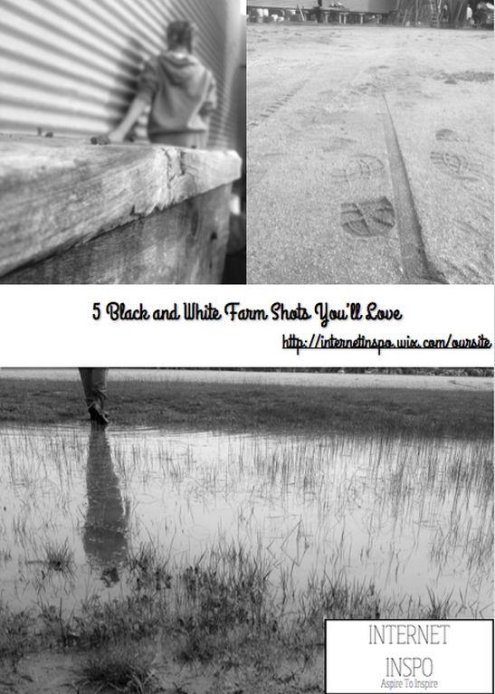 5 Black and White Farm Shots You'll Love