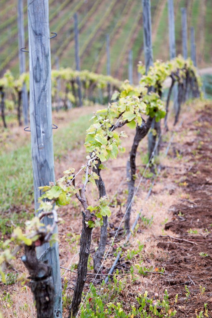 Casa Marin - Chilean Wine Country
