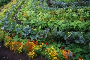 Vegetable garden, South Africa