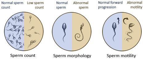 More her.i Average sperm count and morphology myths too