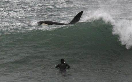 Orcas - Kitesurfing - Seabreeze Forums!
