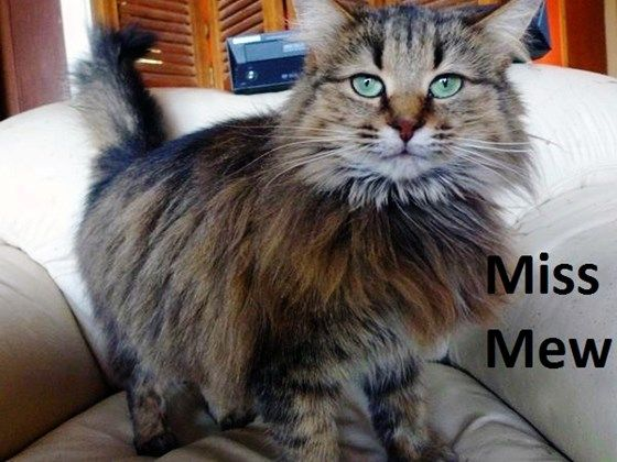 Miss Mew was rescued from a garage where she was fed only rice; Berlioze had an expensive GI emergency; Callie required diagnostic blood work-too thin & lethargic; Monita was born with a cleft palate.