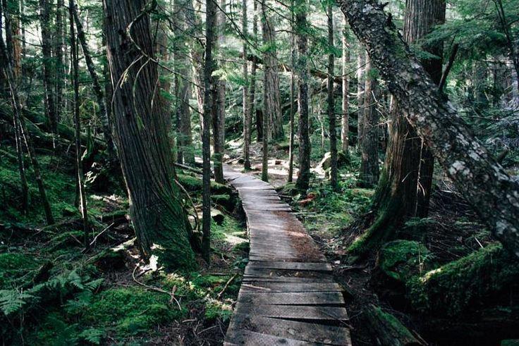 The lush forest trail around Brohm Lake north of Squamish, BC