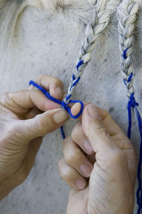 Horse Mane Braiding  #Sarjaton