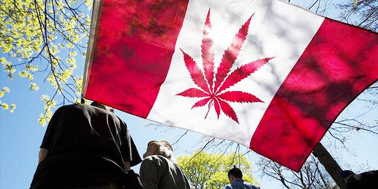 Canadian Law Firm Heavily Criticizes 2018 Recreational Cannabis Bill