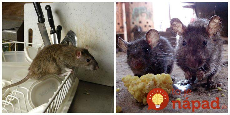 Potkany a myši sa na zimu usadili v garáži a nefungovala na ne ani otrava z obchodu. Toto nám poradil dedko a skutočne to zabralo!