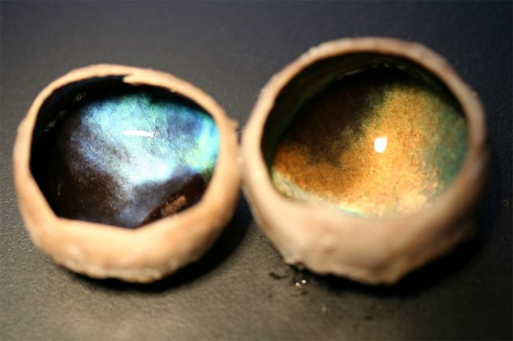 Two dissected reindeer eyes, showing the tapetum lucidum. The left one comes form an animal killed in winter; the right one, in summer.