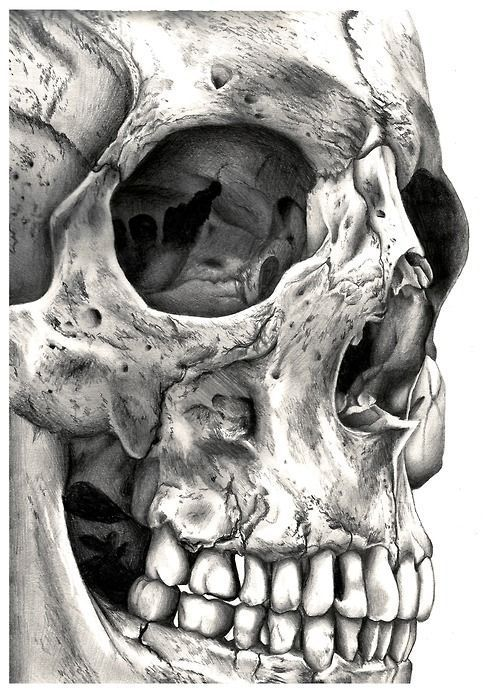 Close-up skull would be a good tattoo, …