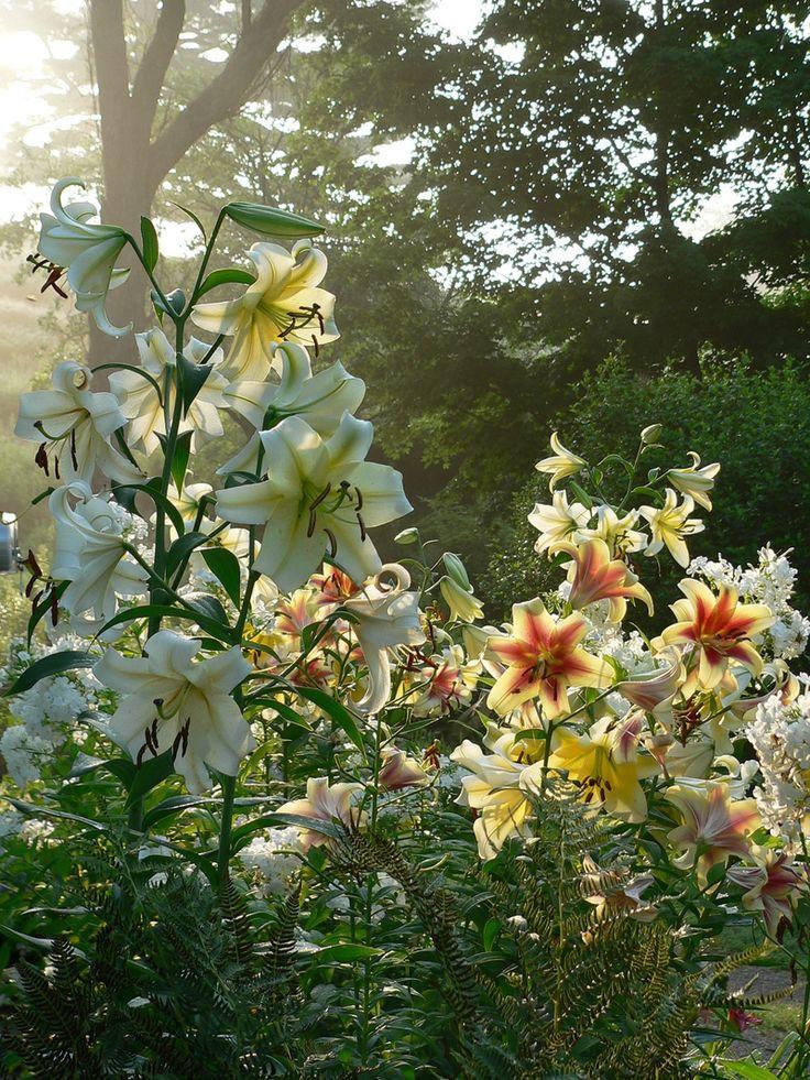 Secret Garden: Best 25+ Lily Garden Ideas On Pinterest
