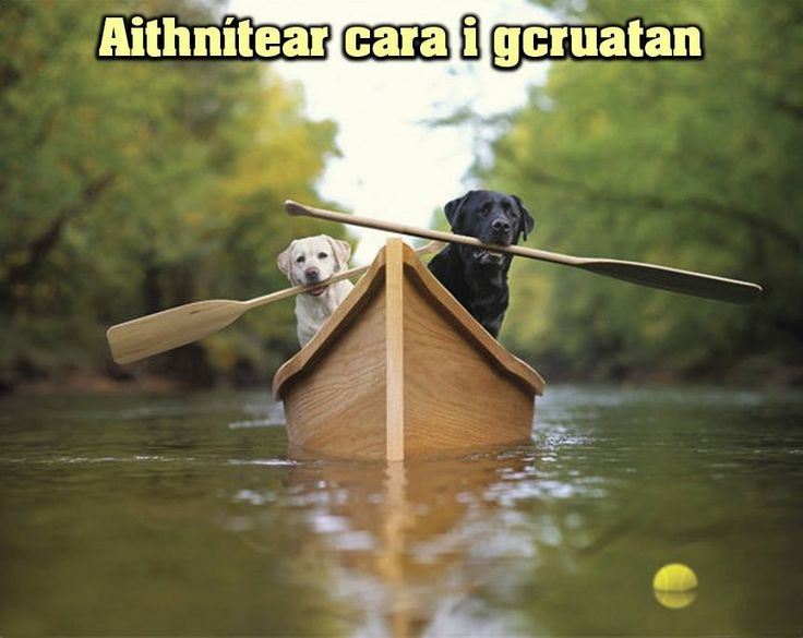 Aitnítear cara I gcruatan - A friend is known in hardship.  A real friend stands by you in the hard times