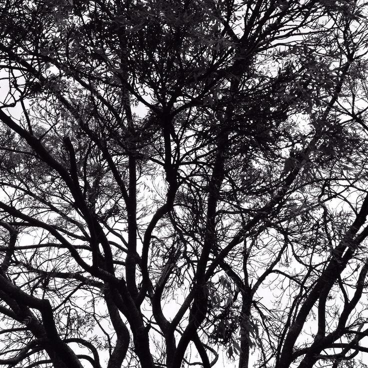 Trees!  #fotografia #bnw #biancoenero