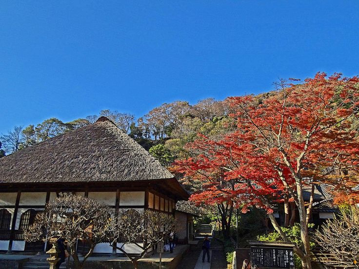 Engaku-ji Temple in Kamakura was founded by the shogunal regent, Hōjō Tokimune in 1282 to pay respect to the samurai who had died defending Japan from the Mongol invasions of 1274 and 1281. The temple steadily grew in size and much of what visitors see today was built in the Muromachi and Edo period due to damage from fires and earthquakes.