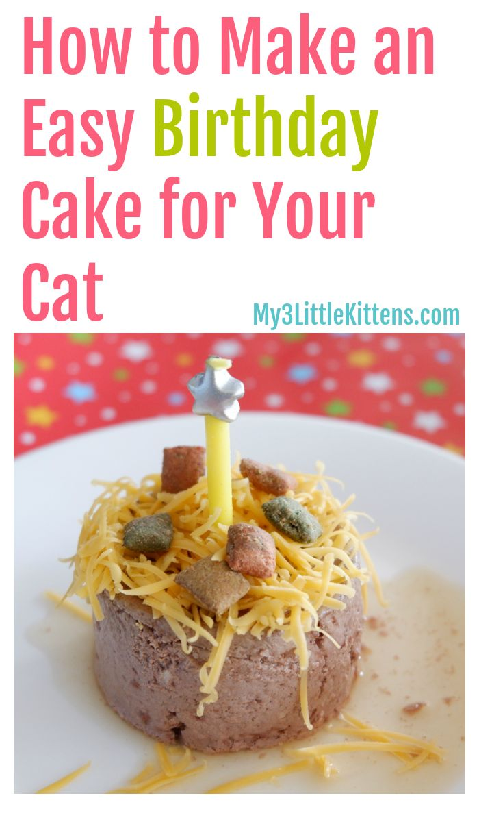This Easy Birthday Cake For Your Cat How To is perfect for your kitty!  – DIY Recipes, Crafts & Projects