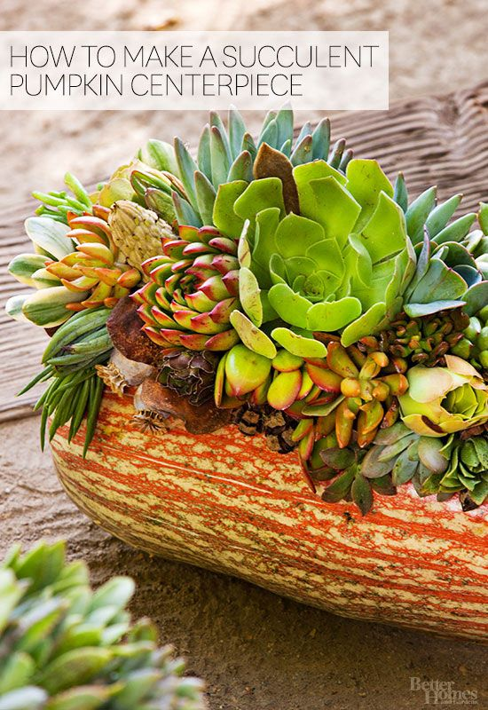 Simple moss and glue come together to make a long-lasting autumn display.