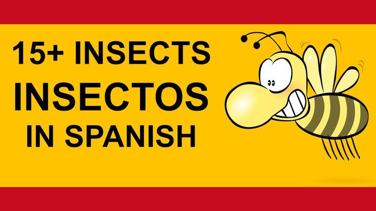How to say 15 insects, los insectos in Spanish tutorial by FreeSpanishtu...