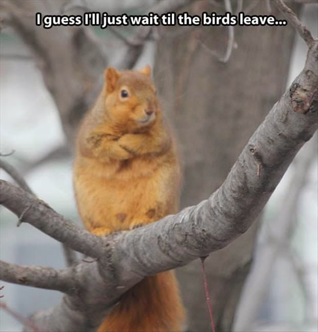 Funny Waiting Squirrel Meme - I guess I'll just wait til the birds leave