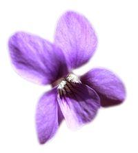 Légères notes aromatiques de violettes