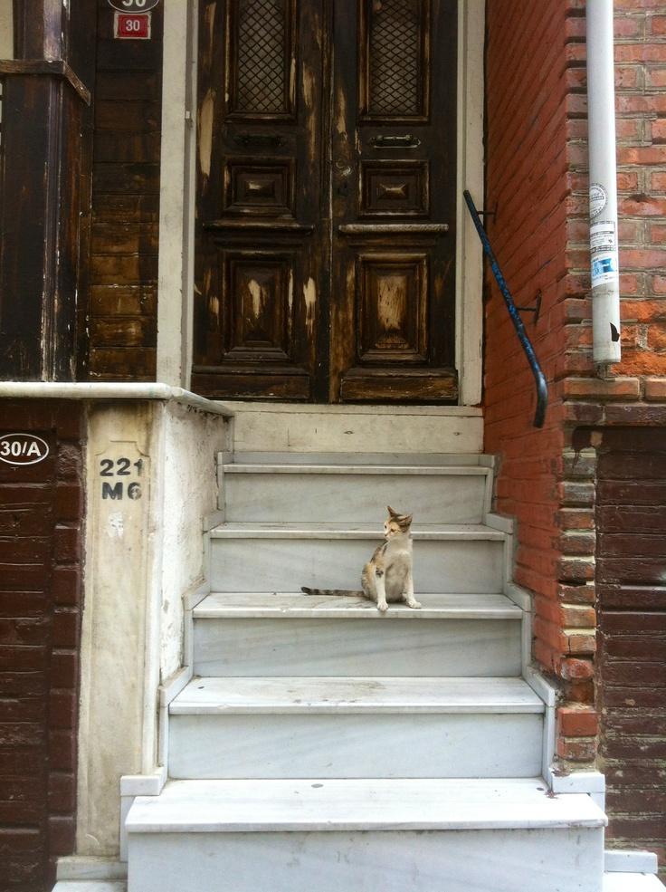 Stray cat, old door. August 2012, Kadikoy, Istanbul.