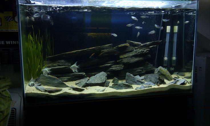 94 besten Aquarium inspiration Bilder auf Pinterest   Aquarien ...