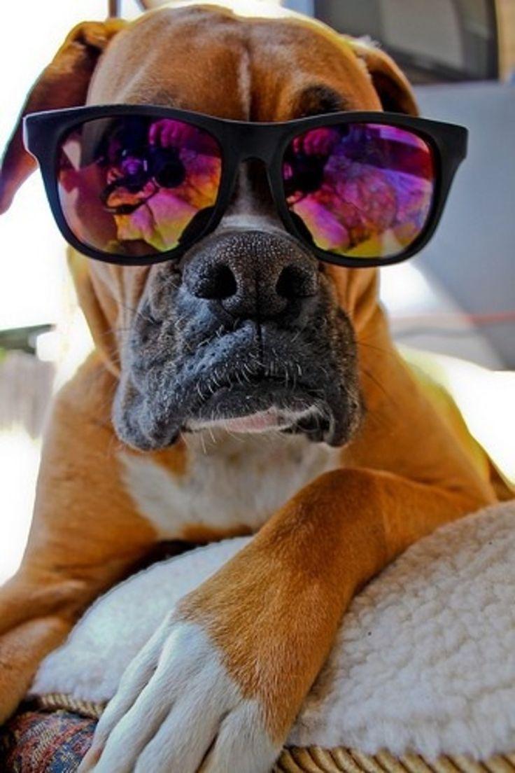 cool dog   Its a Dog's Life   Pinterest   Dog, Animal and ...