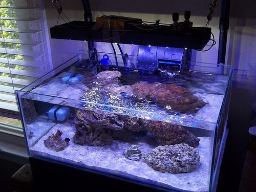 Build Your Own Aquarium Tank - WoodWorking Projects & Plans