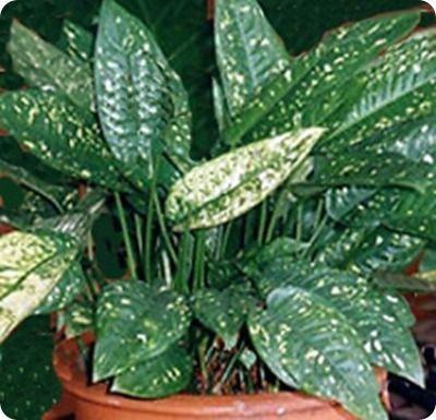 10 piante d'appartamento che ripuliscono l'aria di casa.